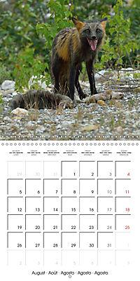 Alaskan Wildlife (Wall Calendar 2019 300 × 300 mm Square) - Produktdetailbild 8