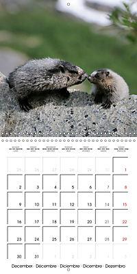 Alaskan Wildlife (Wall Calendar 2019 300 × 300 mm Square) - Produktdetailbild 12