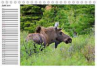 ALASKAS KENAI HALBINSEL (Tischkalender 2019 DIN A5 quer) - Produktdetailbild 6
