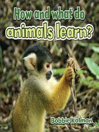 All About Animals Close-Up: How and what do animals learn?, Bobbie Kalman