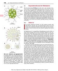 Allgemeine und molekulare Botanik - Produktdetailbild 3