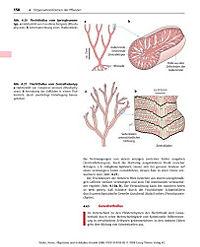 Allgemeine und molekulare Botanik - Produktdetailbild 7