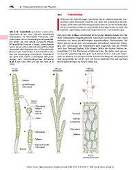 Allgemeine und molekulare Botanik - Produktdetailbild 5