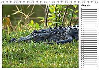 ALLIGATOREN IN FLORIDA (Tischkalender 2019 DIN A5 quer) - Produktdetailbild 3