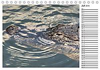 ALLIGATOREN IN FLORIDA (Tischkalender 2019 DIN A5 quer) - Produktdetailbild 7