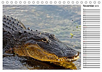 ALLIGATOREN IN FLORIDA (Tischkalender 2019 DIN A5 quer) - Produktdetailbild 11