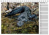 ALLIGATOREN IN FLORIDA (Tischkalender 2019 DIN A5 quer) - Produktdetailbild 12