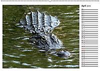 ALLIGATOREN IN FLORIDA (Wandkalender 2019 DIN A2 quer) - Produktdetailbild 4