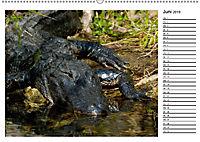 ALLIGATOREN IN FLORIDA (Wandkalender 2019 DIN A2 quer) - Produktdetailbild 6