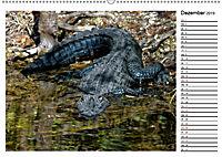 ALLIGATOREN IN FLORIDA (Wandkalender 2019 DIN A2 quer) - Produktdetailbild 12
