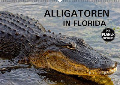ALLIGATOREN IN FLORIDA (Wandkalender 2019 DIN A2 quer), Dieter-M. Wilczek