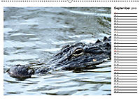ALLIGATOREN IN FLORIDA (Wandkalender 2019 DIN A2 quer) - Produktdetailbild 9