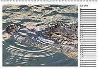 ALLIGATOREN IN FLORIDA (Wandkalender 2019 DIN A2 quer) - Produktdetailbild 7