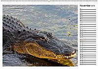 ALLIGATOREN IN FLORIDA (Wandkalender 2019 DIN A2 quer) - Produktdetailbild 11