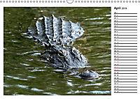 ALLIGATOREN IN FLORIDA (Wandkalender 2019 DIN A3 quer) - Produktdetailbild 4