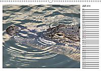 ALLIGATOREN IN FLORIDA (Wandkalender 2019 DIN A3 quer) - Produktdetailbild 7