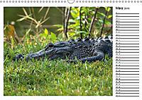ALLIGATOREN IN FLORIDA (Wandkalender 2019 DIN A3 quer) - Produktdetailbild 3