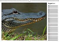 ALLIGATOREN IN FLORIDA (Wandkalender 2019 DIN A3 quer) - Produktdetailbild 8