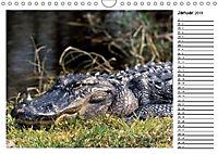 ALLIGATOREN IN FLORIDA (Wandkalender 2019 DIN A4 quer) - Produktdetailbild 1