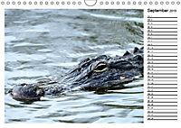 ALLIGATOREN IN FLORIDA (Wandkalender 2019 DIN A4 quer) - Produktdetailbild 9