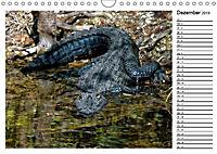 ALLIGATOREN IN FLORIDA (Wandkalender 2019 DIN A4 quer) - Produktdetailbild 12