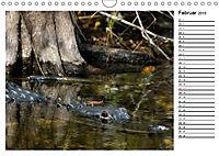 ALLIGATOREN IN FLORIDA (Wandkalender 2019 DIN A4 quer) - Produktdetailbild 2
