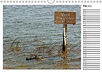 ALLIGATOREN IN FLORIDA (Wandkalender 2019 DIN A4 quer) - Produktdetailbild 5