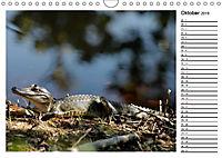 ALLIGATOREN IN FLORIDA (Wandkalender 2019 DIN A4 quer) - Produktdetailbild 10