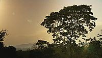 Almendro - Baum des Lebens, DVD - Produktdetailbild 1