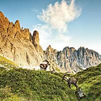 Alpen / The Alps 2019 - Produktdetailbild 5