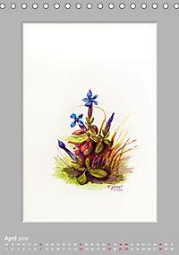 Alpenblumen Aquarelle aus Tirol (Tischkalender 2019 DIN A5 hoch) - Produktdetailbild 4