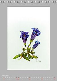 Alpenblumen Aquarelle aus Tirol (Tischkalender 2019 DIN A5 hoch) - Produktdetailbild 6