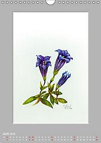 Alpenblumen Aquarelle aus Tirol (Wandkalender 2019 DIN A4 hoch) - Produktdetailbild 6
