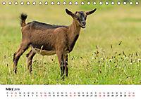 Alte Nutztierrassen 2019 (Tischkalender 2019 DIN A5 quer) - Produktdetailbild 3