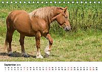 Alte Nutztierrassen 2019 (Tischkalender 2019 DIN A5 quer) - Produktdetailbild 9