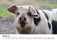Alte Nutztierrassen 2019 (Tischkalender 2019 DIN A5 quer) - Produktdetailbild 2