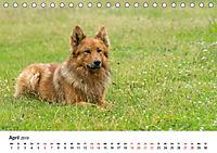 Alte Nutztierrassen 2019 (Tischkalender 2019 DIN A5 quer) - Produktdetailbild 4