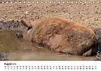 Alte Nutztierrassen 2019 (Tischkalender 2019 DIN A5 quer) - Produktdetailbild 8
