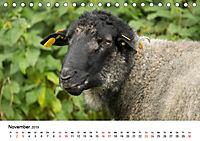 Alte Nutztierrassen 2019 (Tischkalender 2019 DIN A5 quer) - Produktdetailbild 11