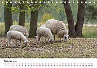 Alte Nutztierrassen 2019 (Tischkalender 2019 DIN A5 quer) - Produktdetailbild 10