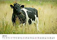 Alte Nutztierrassen 2019 (Wandkalender 2019 DIN A2 quer) - Produktdetailbild 7