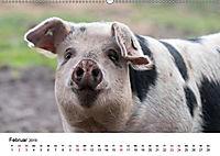 Alte Nutztierrassen 2019 (Wandkalender 2019 DIN A2 quer) - Produktdetailbild 5