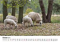 Alte Nutztierrassen 2019 (Wandkalender 2019 DIN A2 quer) - Produktdetailbild 10