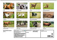 Alte Nutztierrassen 2019 (Wandkalender 2019 DIN A2 quer) - Produktdetailbild 12