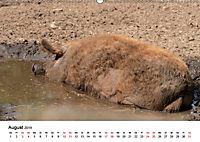Alte Nutztierrassen 2019 (Wandkalender 2019 DIN A2 quer) - Produktdetailbild 8