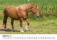 Alte Nutztierrassen 2019 (Wandkalender 2019 DIN A2 quer) - Produktdetailbild 9