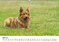 Alte Nutztierrassen 2019 (Wandkalender 2019 DIN A2 quer) - Produktdetailbild 4