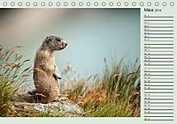 Am Grossglockner - Planer (Tischkalender 2019 DIN A5 quer) - Produktdetailbild 3