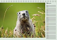 Am Grossglockner - Planer (Tischkalender 2019 DIN A5 quer) - Produktdetailbild 5