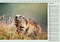 Am Grossglockner - Planer (Tischkalender 2019 DIN A5 quer) - Produktdetailbild 7